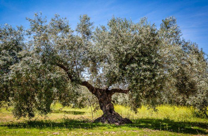 Mediterranean natural ingredients